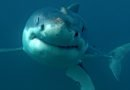 The feeding frenzy is on – Shark Week resurfaces on Discovery Channel