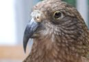 PBS' 'NOVA: Bird Brain' takes studies of avian intelligence to new heights