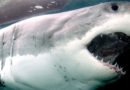 Shark Week marks 30th anniversary with sharks literal and figurative