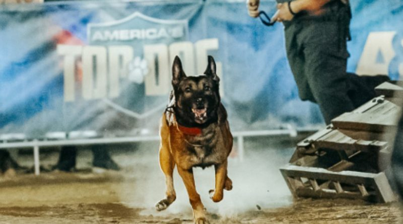 Canines go muzzle to muzzle to be named 'America's Top Dog' on A&E