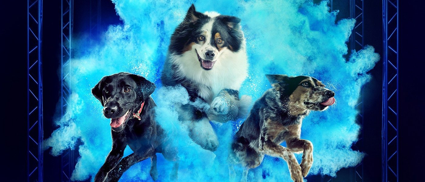 'America's Top Dog' – Canines go at it in Season 2